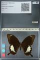 http://mczbase.mcz.harvard.edu/specimen_images/ent-lepidoptera/images/2012_10_27/IMG_133386.JPG