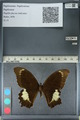 http://mczbase.mcz.harvard.edu/specimen_images/ent-lepidoptera/images/2012_10_27/IMG_133387.JPG
