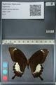 http://mczbase.mcz.harvard.edu/specimen_images/ent-lepidoptera/images/2012_10_27/IMG_133388.JPG