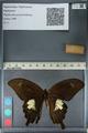 http://mczbase.mcz.harvard.edu/specimen_images/ent-lepidoptera/images/2012_10_27/IMG_133390.JPG