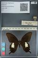 http://mczbase.mcz.harvard.edu/specimen_images/ent-lepidoptera/images/2012_10_27/IMG_133391.JPG