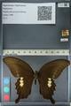http://mczbase.mcz.harvard.edu/specimen_images/ent-lepidoptera/images/2012_10_27/IMG_133392.JPG