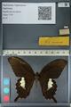http://mczbase.mcz.harvard.edu/specimen_images/ent-lepidoptera/images/2012_10_27/IMG_133394.JPG