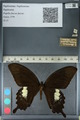 http://mczbase.mcz.harvard.edu/specimen_images/ent-lepidoptera/images/2012_10_27/IMG_133395.JPG