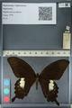 http://mczbase.mcz.harvard.edu/specimen_images/ent-lepidoptera/images/2012_10_27/IMG_133396.JPG