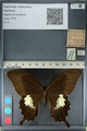http://mczbase.mcz.harvard.edu/specimen_images/ent-lepidoptera/images/2012_10_27/IMG_133397.JPG