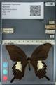 http://mczbase.mcz.harvard.edu/specimen_images/ent-lepidoptera/images/2012_10_27/IMG_133398.JPG