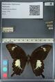 http://mczbase.mcz.harvard.edu/specimen_images/ent-lepidoptera/images/2012_10_27/IMG_133399.JPG