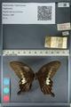 http://mczbase.mcz.harvard.edu/specimen_images/ent-lepidoptera/images/2012_10_27/IMG_133400.JPG