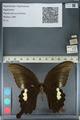 http://mczbase.mcz.harvard.edu/specimen_images/ent-lepidoptera/images/2012_10_27/IMG_133401.JPG