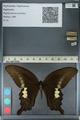 http://mczbase.mcz.harvard.edu/specimen_images/ent-lepidoptera/images/2012_10_27/IMG_133404.JPG