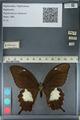 http://mczbase.mcz.harvard.edu/specimen_images/ent-lepidoptera/images/2012_10_27/IMG_133406.JPG