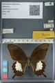 http://mczbase.mcz.harvard.edu/specimen_images/ent-lepidoptera/images/2012_10_27/IMG_133407.JPG