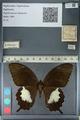 http://mczbase.mcz.harvard.edu/specimen_images/ent-lepidoptera/images/2012_10_27/IMG_133408.JPG