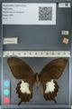 http://mczbase.mcz.harvard.edu/specimen_images/ent-lepidoptera/images/2012_10_27/IMG_133409.JPG