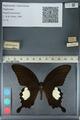 http://mczbase.mcz.harvard.edu/specimen_images/ent-lepidoptera/images/2012_10_27/IMG_133410.JPG