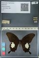 http://mczbase.mcz.harvard.edu/specimen_images/ent-lepidoptera/images/2012_10_27/IMG_133411.JPG