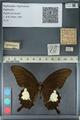 http://mczbase.mcz.harvard.edu/specimen_images/ent-lepidoptera/images/2012_10_27/IMG_133412.JPG