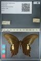 http://mczbase.mcz.harvard.edu/specimen_images/ent-lepidoptera/images/2012_10_27/IMG_133414.JPG