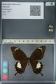 http://mczbase.mcz.harvard.edu/specimen_images/ent-lepidoptera/images/2012_10_27/IMG_133420.JPG