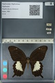http://mczbase.mcz.harvard.edu/specimen_images/ent-lepidoptera/images/2012_10_27/IMG_133422.JPG