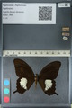 http://mczbase.mcz.harvard.edu/specimen_images/ent-lepidoptera/images/2012_10_27/IMG_133423.JPG