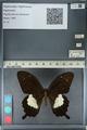 http://mczbase.mcz.harvard.edu/specimen_images/ent-lepidoptera/images/2012_10_27/IMG_133424.JPG
