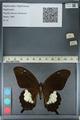http://mczbase.mcz.harvard.edu/specimen_images/ent-lepidoptera/images/2012_10_27/IMG_133425.JPG