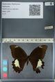 http://mczbase.mcz.harvard.edu/specimen_images/ent-lepidoptera/images/2012_10_27/IMG_133427.JPG