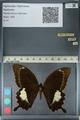 http://mczbase.mcz.harvard.edu/specimen_images/ent-lepidoptera/images/2012_10_27/IMG_133429.JPG