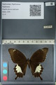 http://mczbase.mcz.harvard.edu/specimen_images/ent-lepidoptera/images/2012_10_27/IMG_133430.JPG