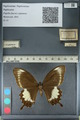 http://mczbase.mcz.harvard.edu/specimen_images/ent-lepidoptera/images/2012_10_27/IMG_133443.JPG