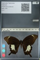 http://mczbase.mcz.harvard.edu/specimen_images/ent-lepidoptera/images/2012_10_27/IMG_133445.JPG