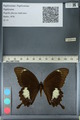 http://mczbase.mcz.harvard.edu/specimen_images/ent-lepidoptera/images/2012_10_27/IMG_133448.JPG