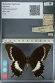 http://mczbase.mcz.harvard.edu/specimen_images/ent-lepidoptera/images/2012_10_27/IMG_133450.JPG