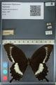 http://mczbase.mcz.harvard.edu/specimen_images/ent-lepidoptera/images/2012_10_27/IMG_133453.JPG