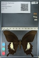 http://mczbase.mcz.harvard.edu/specimen_images/ent-lepidoptera/images/2012_10_27/IMG_133456.JPG