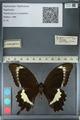 http://mczbase.mcz.harvard.edu/specimen_images/ent-lepidoptera/images/2012_10_27/IMG_133457.JPG