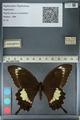 http://mczbase.mcz.harvard.edu/specimen_images/ent-lepidoptera/images/2012_10_27/IMG_133459.JPG