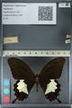 http://mczbase.mcz.harvard.edu/specimen_images/ent-lepidoptera/images/2012_10_27/IMG_133460.JPG