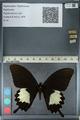 http://mczbase.mcz.harvard.edu/specimen_images/ent-lepidoptera/images/2012_10_27/IMG_133461.JPG