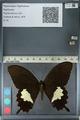 http://mczbase.mcz.harvard.edu/specimen_images/ent-lepidoptera/images/2012_10_27/IMG_133463.JPG