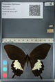 http://mczbase.mcz.harvard.edu/specimen_images/ent-lepidoptera/images/2012_10_27/IMG_133465.JPG