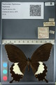http://mczbase.mcz.harvard.edu/specimen_images/ent-lepidoptera/images/2012_10_27/IMG_133466.JPG