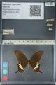 http://mczbase.mcz.harvard.edu/specimen_images/ent-lepidoptera/images/2012_10_27/IMG_133467.JPG