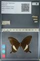 http://mczbase.mcz.harvard.edu/specimen_images/ent-lepidoptera/images/2012_10_27/IMG_133468.JPG