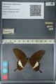 http://mczbase.mcz.harvard.edu/specimen_images/ent-lepidoptera/images/2012_10_27/IMG_133469.JPG