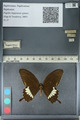 http://mczbase.mcz.harvard.edu/specimen_images/ent-lepidoptera/images/2012_10_27/IMG_133470.JPG