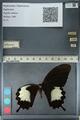 http://mczbase.mcz.harvard.edu/specimen_images/ent-lepidoptera/images/2012_10_27/IMG_133472.JPG