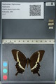 http://mczbase.mcz.harvard.edu/specimen_images/ent-lepidoptera/images/2012_10_27/IMG_133473.JPG